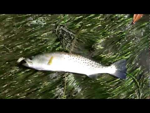 Inshore Fishing in Englewood, FL *new intro*