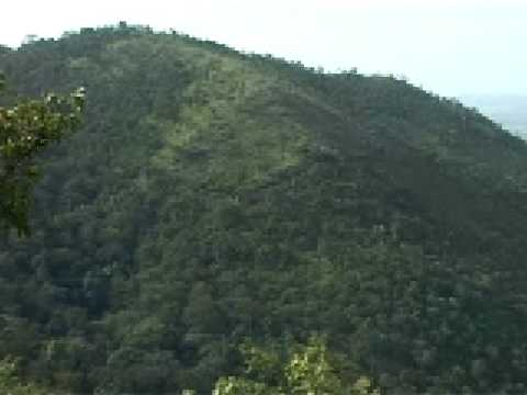 Forests of Karnataka II