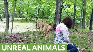 Wild deer brings fawn to visit woman sitting in the forest