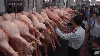 Bảo đảm nguồn cung thịt lợn cho Tết kỷ Hợi