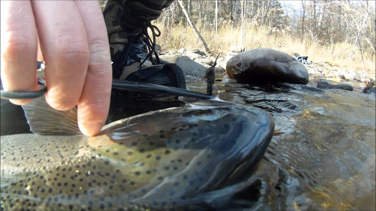 Gopro fly fishing salmon river ny youtube for Salmon river ny fishing regulations