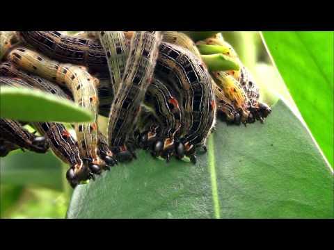 蟲相逢宣導短片(1分鐘版)