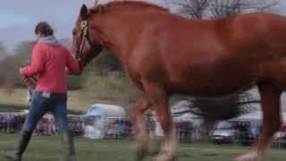 Heavy Horse Festival 2013
