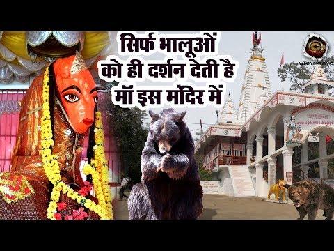 खतरनाक जंगली भालू आकर करते है यहाँ पूजा | India's Mysterious Temple | Mano Ya Na Mano