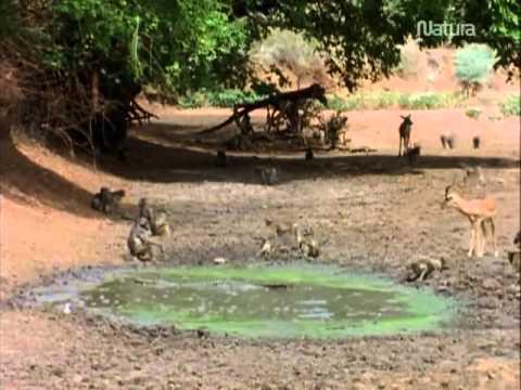 Documental La Ultima Cena de los Cocodrilos Español