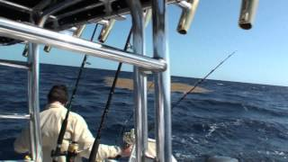 Dolphin (Mahi) Fishing Florida Keys 2012 - Get Reel Fishing