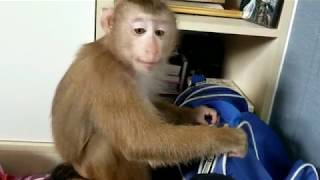 Monkey Baby Nui | Nui played by himself and slept