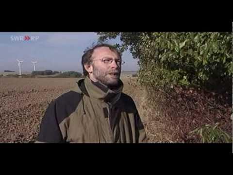 Warum Windräder Fledermäuse töten (SWR.de)