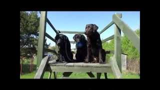 Szkolenie pozytywne Pies-asystent