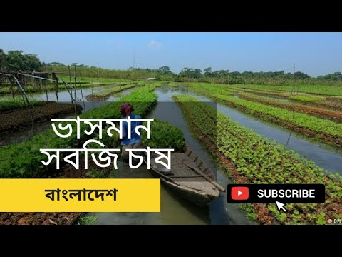 The floating cultivation system in Bangladesh