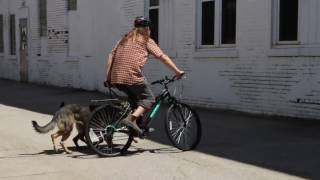 Dog Training   Bike Circles - Spatial Awareness   Solid K9 Training Dog Training