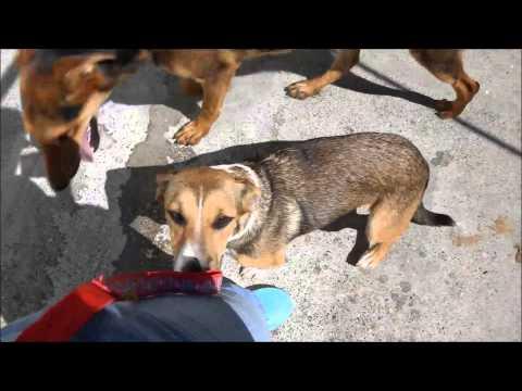 Animalinneed: Video of Kalia