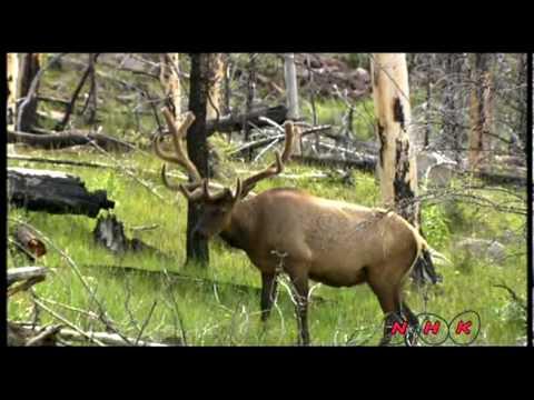 Парк йеллоустоун - биосферный заповедник международного значения