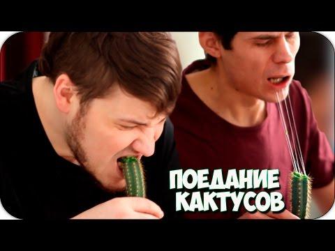 Поедание кактусов - 2ДШ Чудики