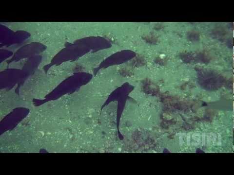 Februari 2013 world for St augustine deep sea fishing