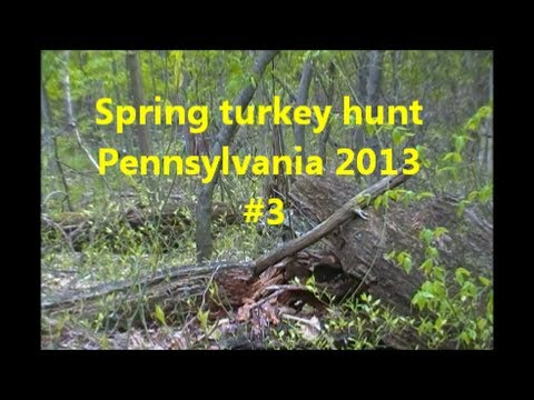 Spring turkey hunt Pennsylvania 2013 #3