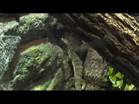 Henry Doorly Zoo- Lied Jungle 1/3