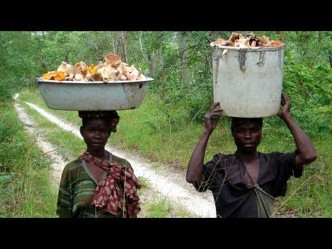 Africa's dry forests key to food security
