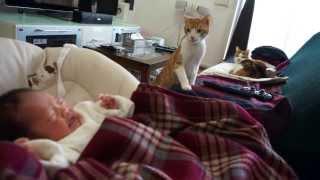 赤ちゃんが気になる猫 curious cats meet a baby