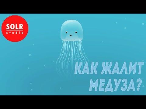 Как медуза может вас ужалить? - Neosha S Kashef (SOLR озвучка)