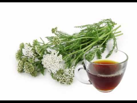 Yarrow Tea Health Benefits