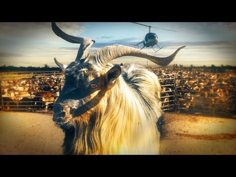 60 Minutes Australia: Goat rush (2017)