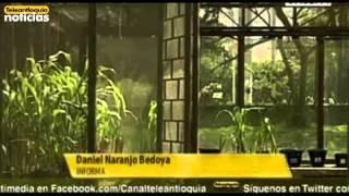 Investigadores de la Universidad Nacional descubren nuevas especies de plantas en Antioquia