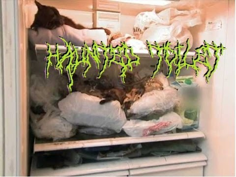 (death Metal Porn Gore Grind) Blood On My Hands, Shit On My Walls By Haunted Toilet   Hoarders video