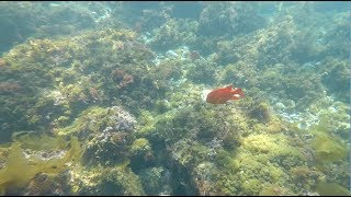 California's Secret Adventures | Catalina Island | Backpacking and Snorkeling