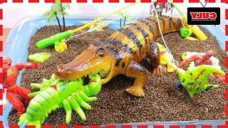 Siêu nhân gao câu cá cho cá sấu khóc nhè đói bụng đồ chơi trẻ em toy for kids