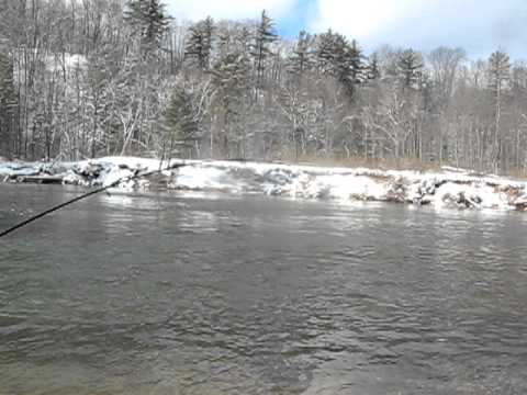 2011  tippy dam steelhead fishing  ( february)