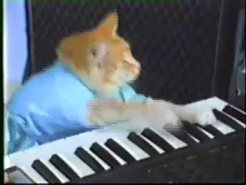 Play her off, Keyboard Cat! (Risky Business gone wrong)