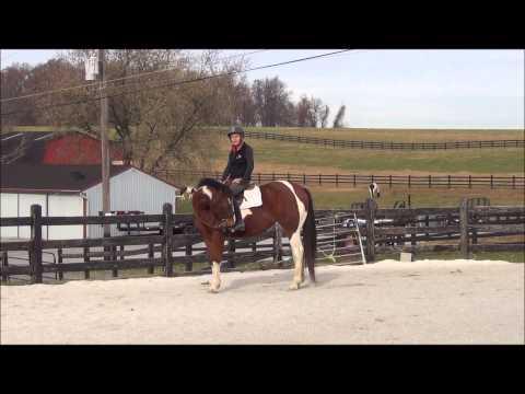 Riding a Nervous Horse