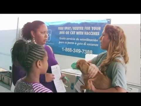 Making a Difference: Mobile Spay/Neuter Clinics