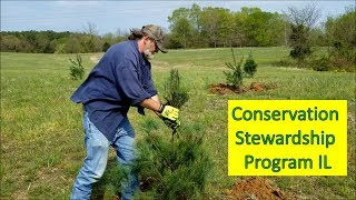 Planting pine trees and Creating deer habitat