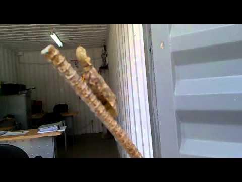 La Machaca, insecto con forma de cáscara de maní