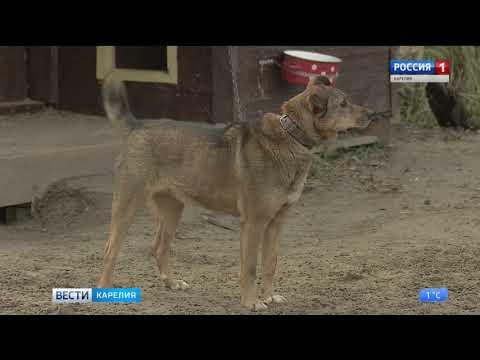 Около 12 млн рублей из бюджета республики на отлов безнадзорных животных