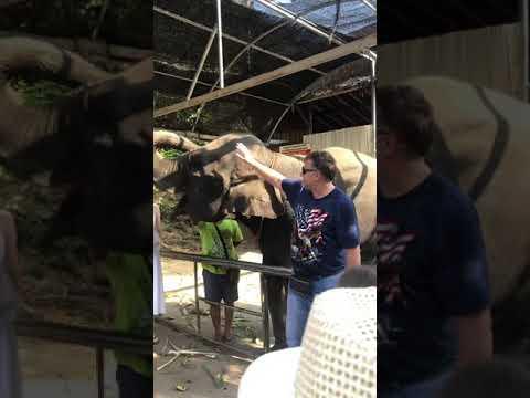 Pui elefant pus pe joaca Thailanda