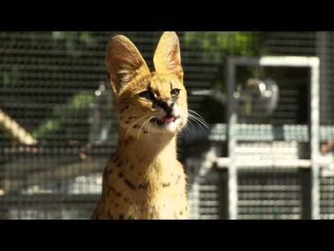 Werribee Open Range Zoo Video