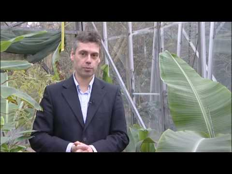 Effects of climate change on crops (University of Reading)