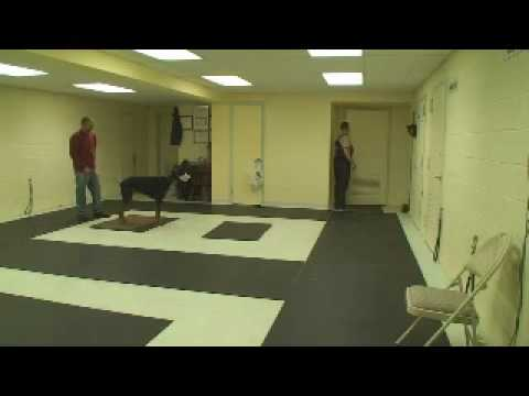 Guard Dog Training   Attack Dog Training Secrets!! K9-1 video
