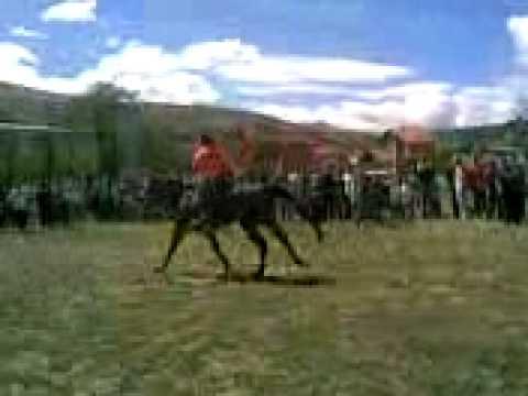 Vrapimi i kuajve ne Bresan