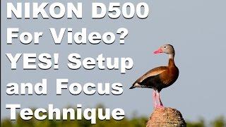 Nikon D500 for Video - Setup and Focus Technique