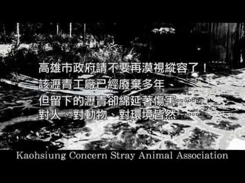 廢棄瀝青工廠淪為動物墳場