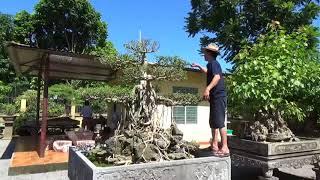 SH.1679.Thăm vườn cảnh đặc biệt Dũng Sắt thành phố Ninh Bình
