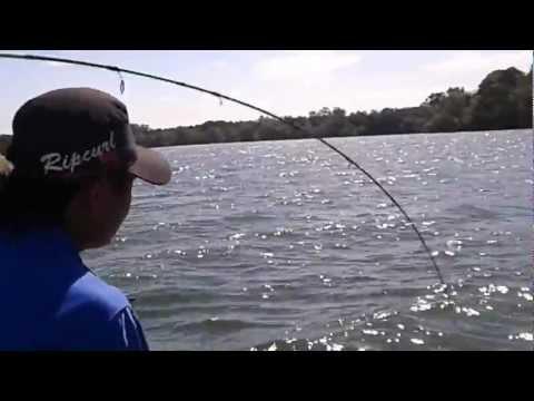 Pancing-ikan kerapu di gelang patah