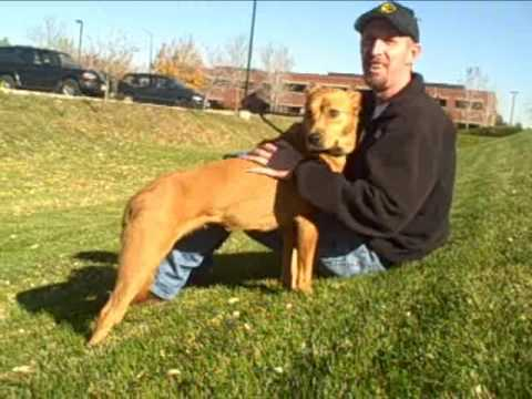 dog adoption colorado 