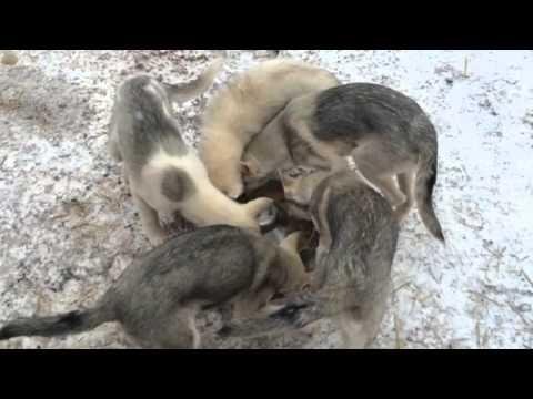 犬のスピンごはん!食べたい勢いで回転してしまう犬たち