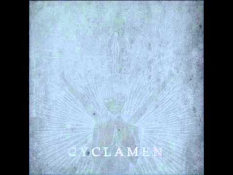 Cyclamen - Comfort