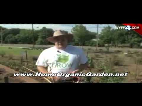 Organic Gardening Basics | Growing Organic Vegetables, Herbs and Fruits